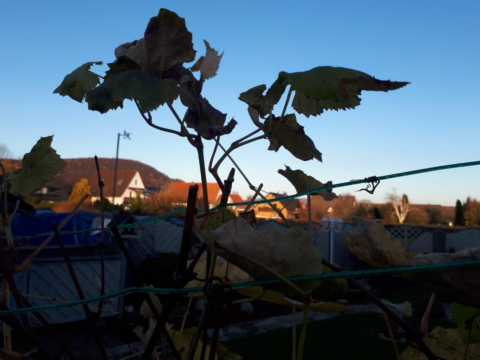 Herbst-3