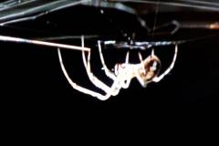 Spinnenbild